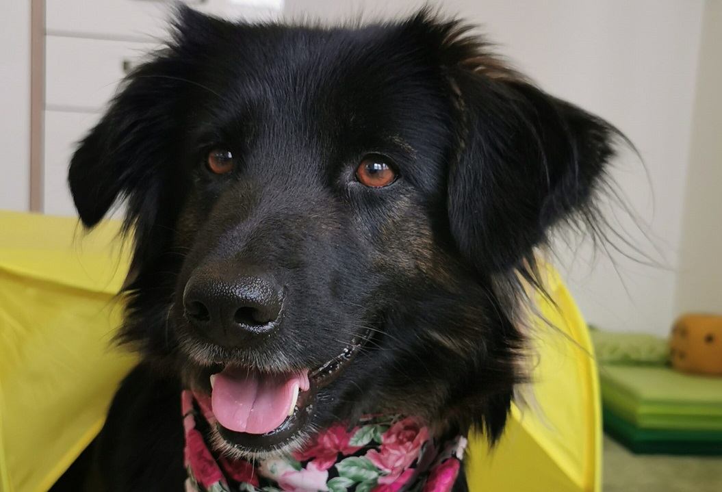 Hundetherapie mit Bella